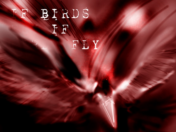 If-Birds-Fly.